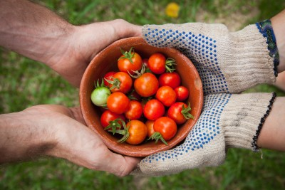 Unsplash_Elaine Casap_bowl of tomatoes served on person hand